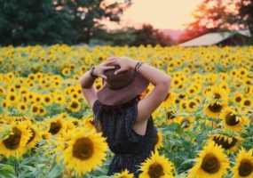 Get Bright this Summer Season! Eight Sunflower-themed Designs