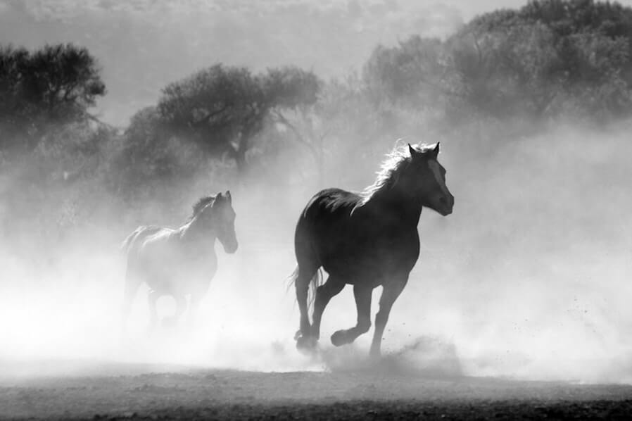 horse herd fog nature
