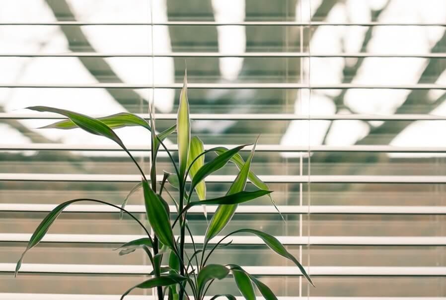 window solar shades
