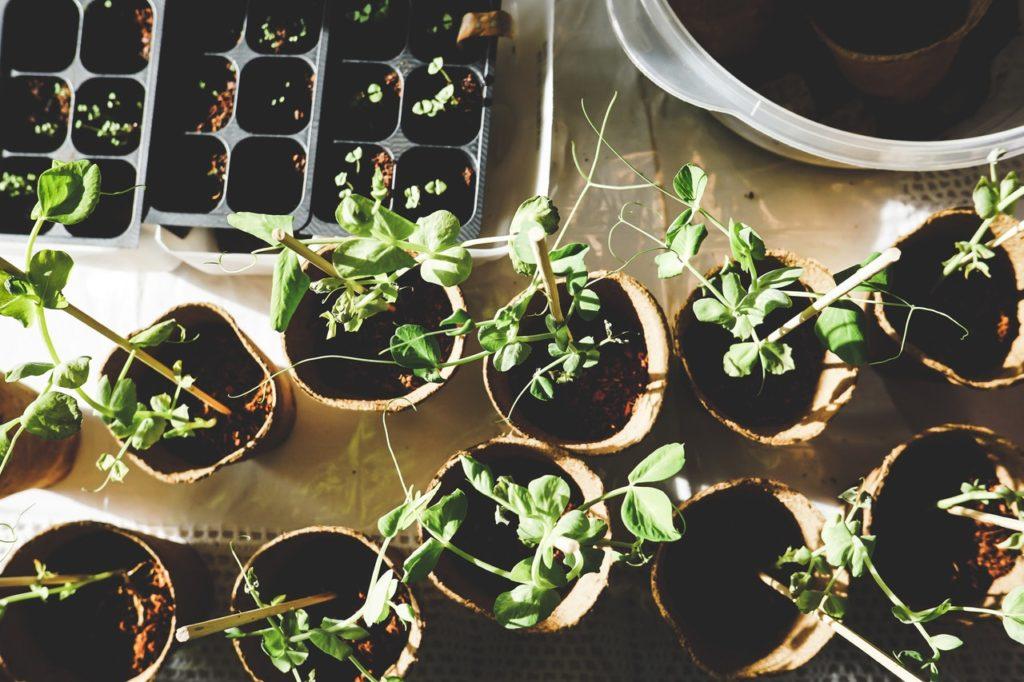 plant at pot