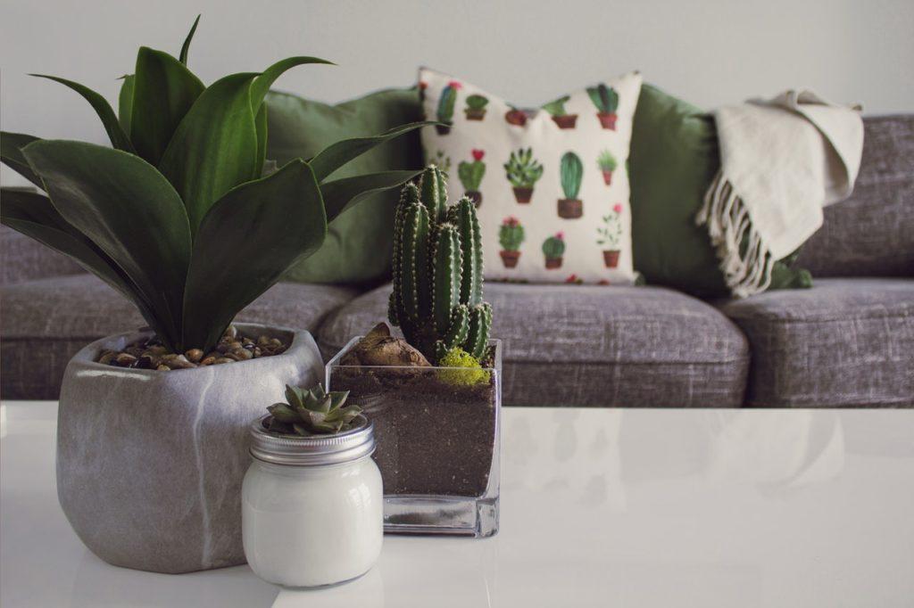 functional indoor plants