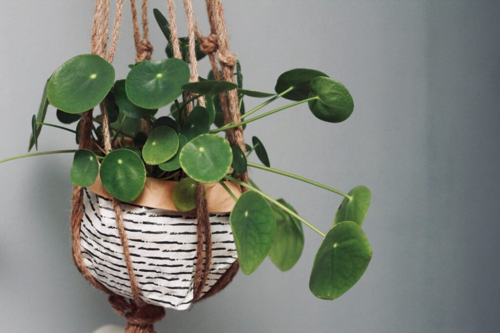 Condo Gardening: 10 Household Items To Get You Started